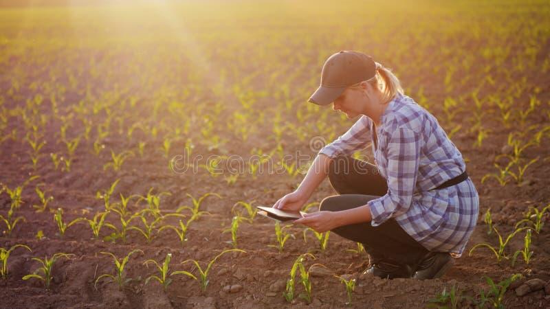 En kvinnlig bonde arbetar i fältet på solnedgången Studera växten skjuter och att fotografera dem som använder en minnestavla royaltyfri foto