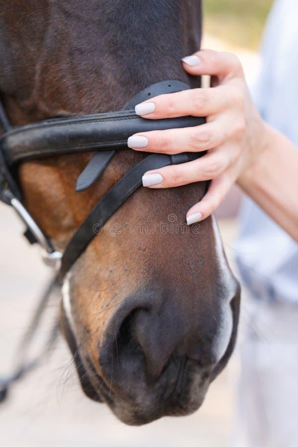 En kvinnlig hand slår hästen som ` s tystar ned utomhus royaltyfri bild