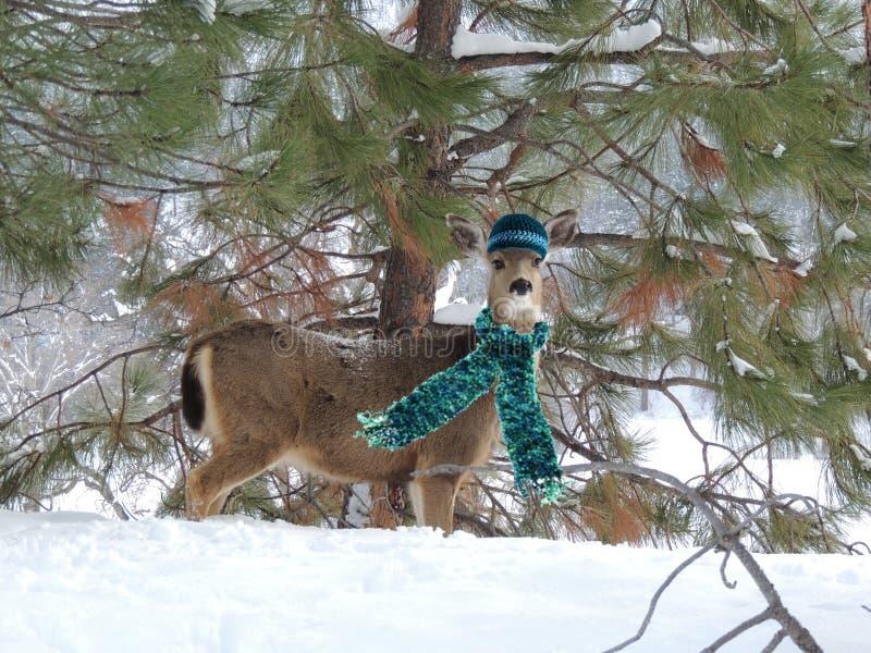 En kvinnlig hjort som håller som är varm på en kall vinterdag royaltyfri foto