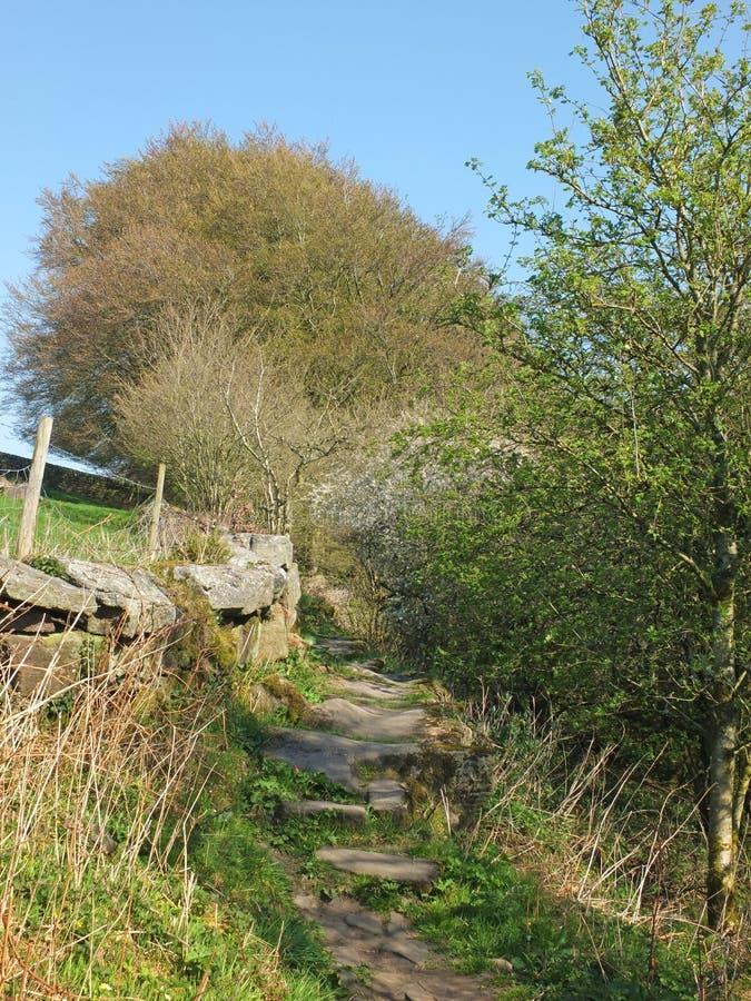 en lång smal bana en täckt mossa stenar tillsammans med väggen och staketet med att slå ut vårskogträd på en sida och en äng på arkivbild