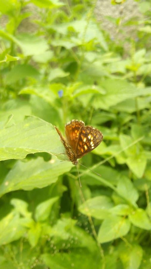 En lös fjäril fotografering för bildbyråer