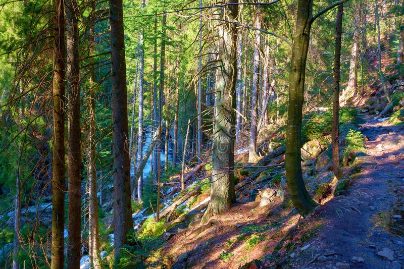 En l?s str?m korsar den bavarian skogen royaltyfri bild