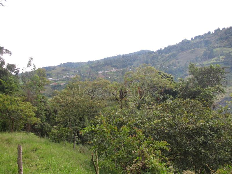 En la山脉东方de哥伦比亚 图库摄影