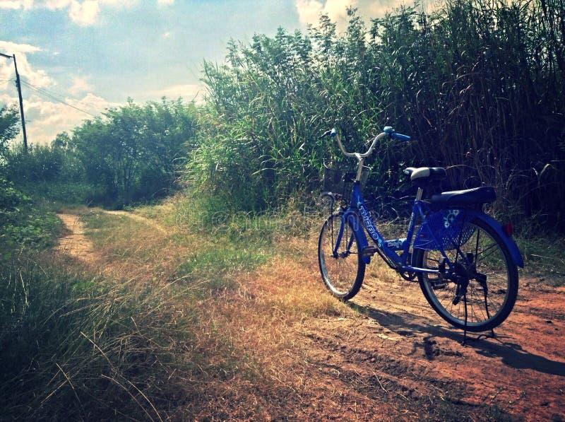 en la bicicleta, Tailandia, ayutthaya, árbol, flover imagenes de archivo