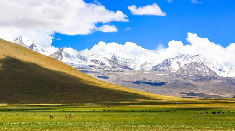 En la cuesta del norte de las montañas de Himalaya imagenes de archivo