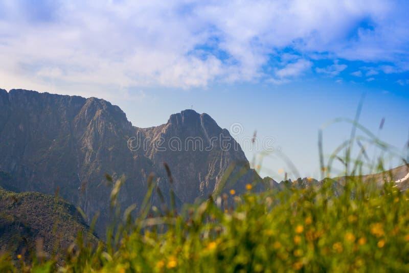 En la hierba creciente del primero plano, y en el fondo una vista de la montaña de Giewont imagen de archivo libre de regalías
