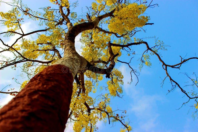 En la opinión de ángulo larga de la estación de primavera del árbol fotografía de archivo libre de regalías