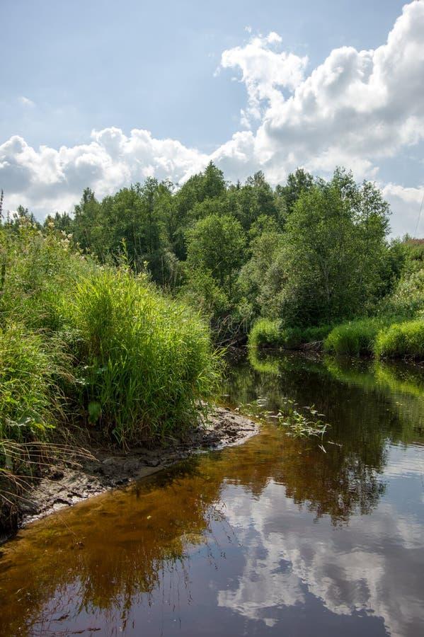 En la orilla del río overgrown debajo de las nubes blancas imagen de archivo