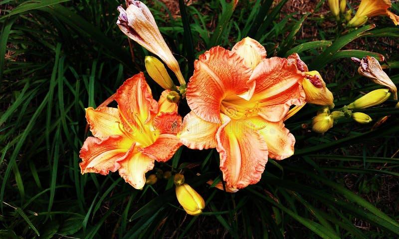En la plena floración imagen de archivo