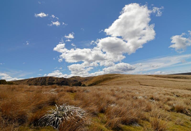 En la ruta de la choza del globo a la cáscara del lago, parque nacional de Kahurangi, Nueva Zelanda fotografía de archivo
