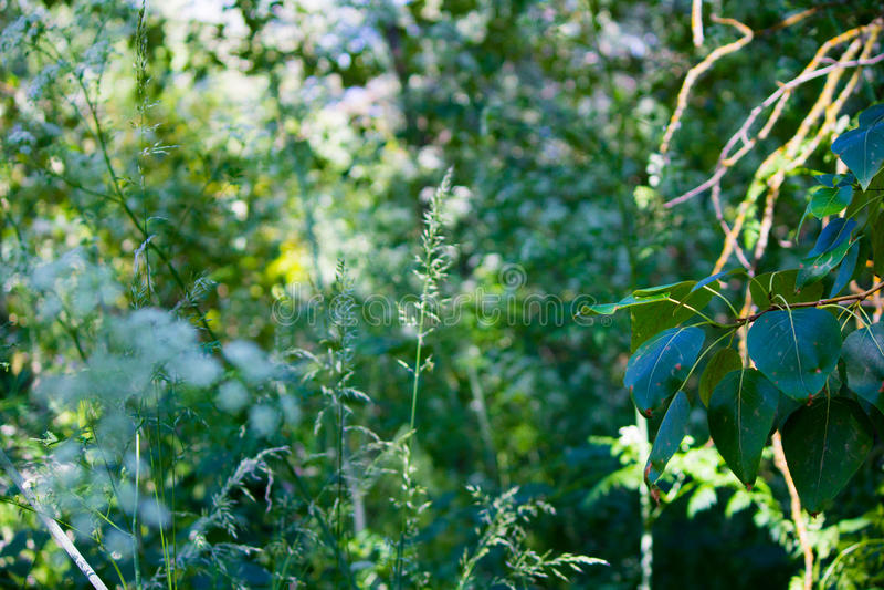 en la selva fotografía de archivo
