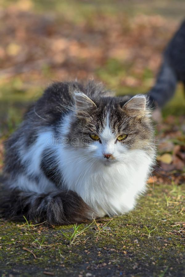 En la tierra el gato tiene comida y está mirando adelante a imágenes de archivo libres de regalías