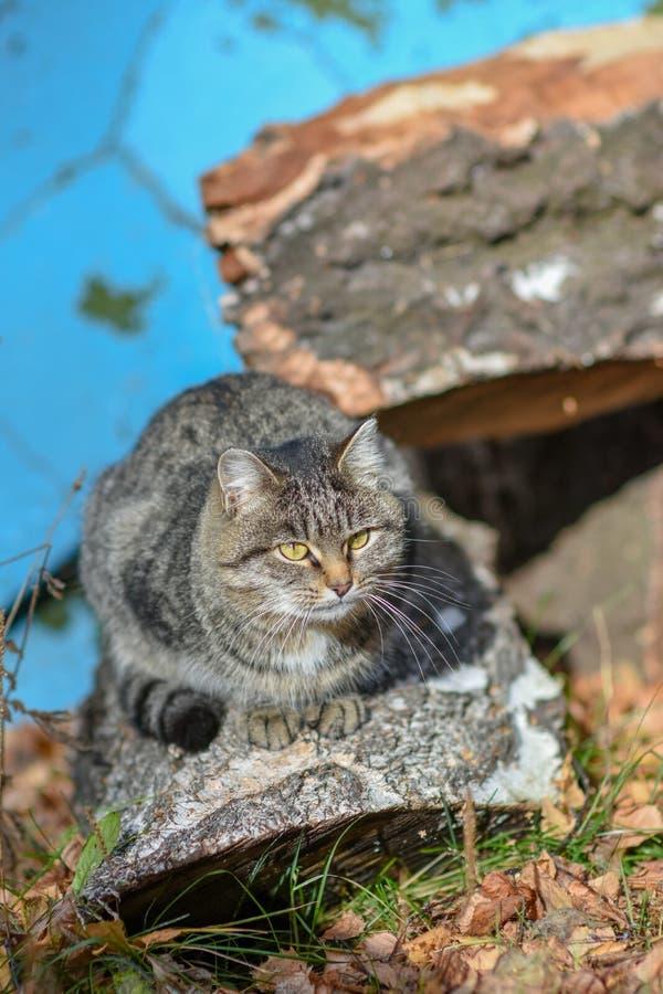 En la tierra el gato tiene comida y está mirando adelante a imagen de archivo