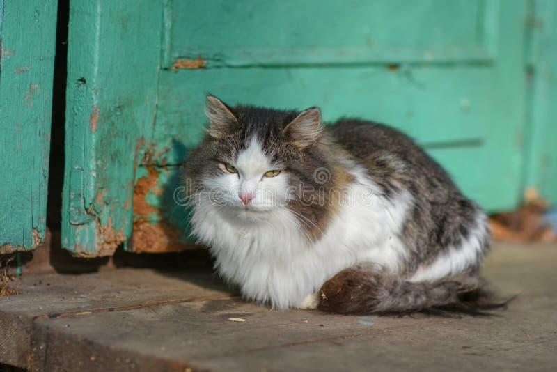 En la tierra el gato tiene comida y está mirando adelante a fotos de archivo