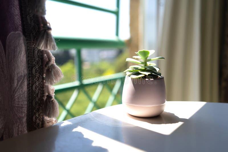 En la ventana abierta con las cortinas en una tabla blanca hay una flor verde en una maceta fotografía de archivo