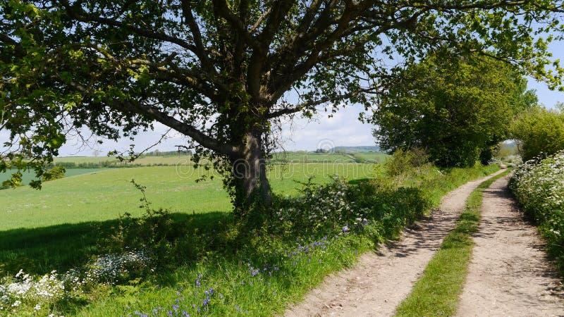 En lantlig landsgränd i England royaltyfria foton