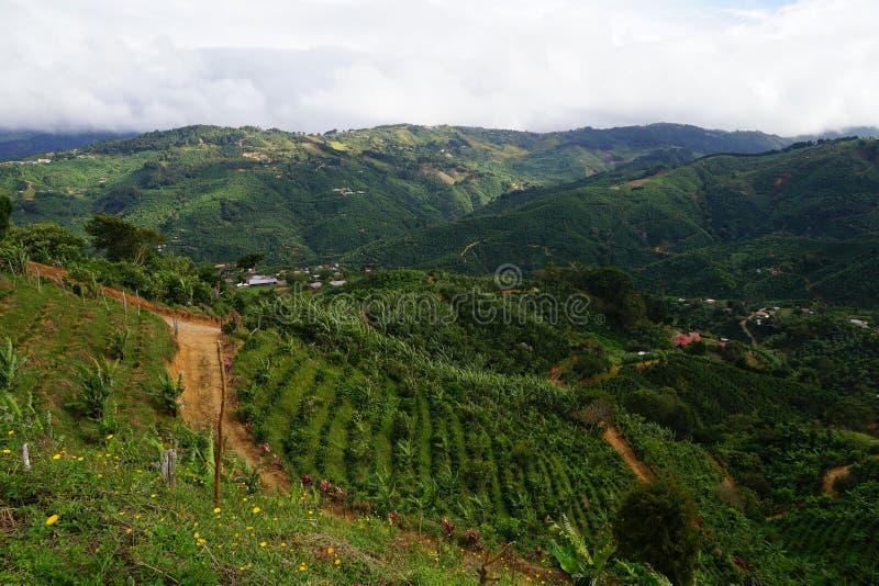 En lantlig väg för grus till och med bergkoloni i Costa Rica royaltyfri bild