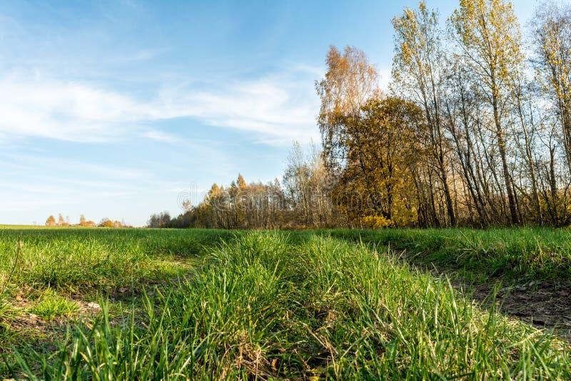 En lantlig väg passerar till och med ett grönt fält, träd med gul orange lövverk, höstlandskap royaltyfri fotografi