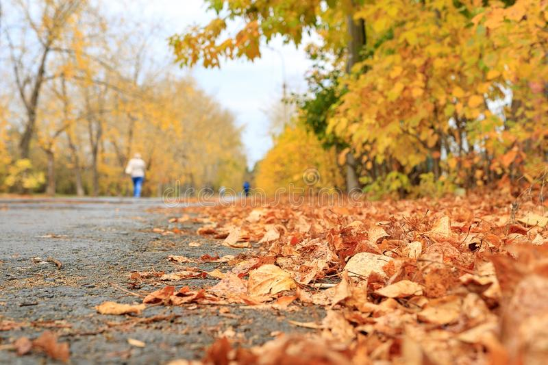 En las hojas de otoño del primero plano a lo largo de la acera de nuevo al horizonte que deja un rastro con caminar de la gente fotos de archivo