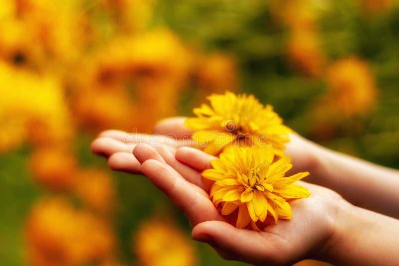 En las manos de las flores amarillas de un niño fotografía de archivo