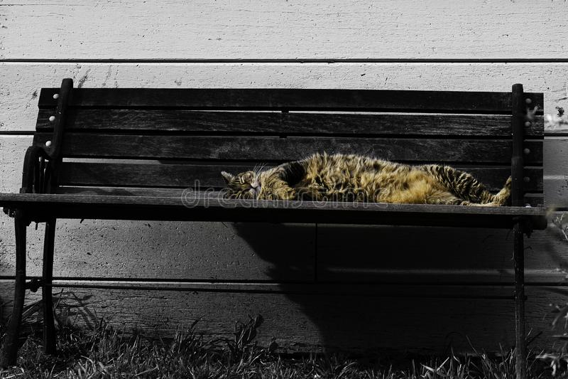 En lat katt som sover i solen arkivbilder