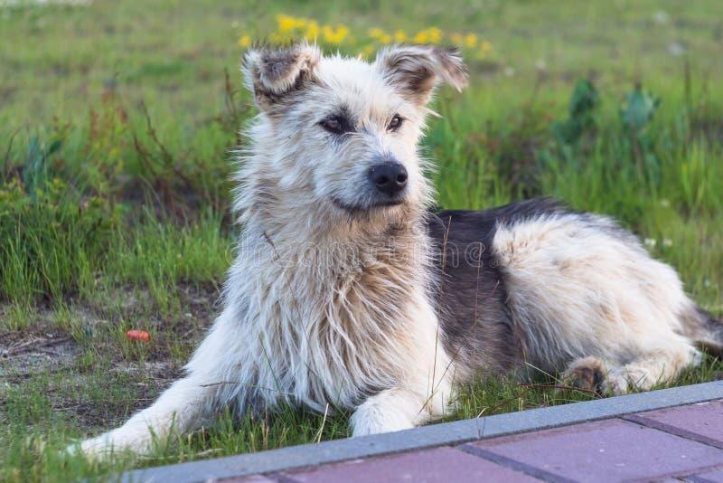 En le hund i sommaraftonen arkivbild