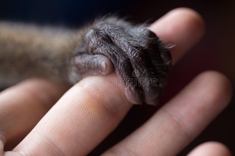 En liten apa hand som håller fingret på en människa Djurskydd fotografering för bildbyråer