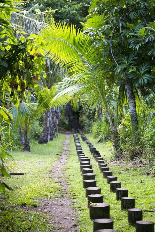 En liten bana i den Fijian tropiska skogen royaltyfri foto