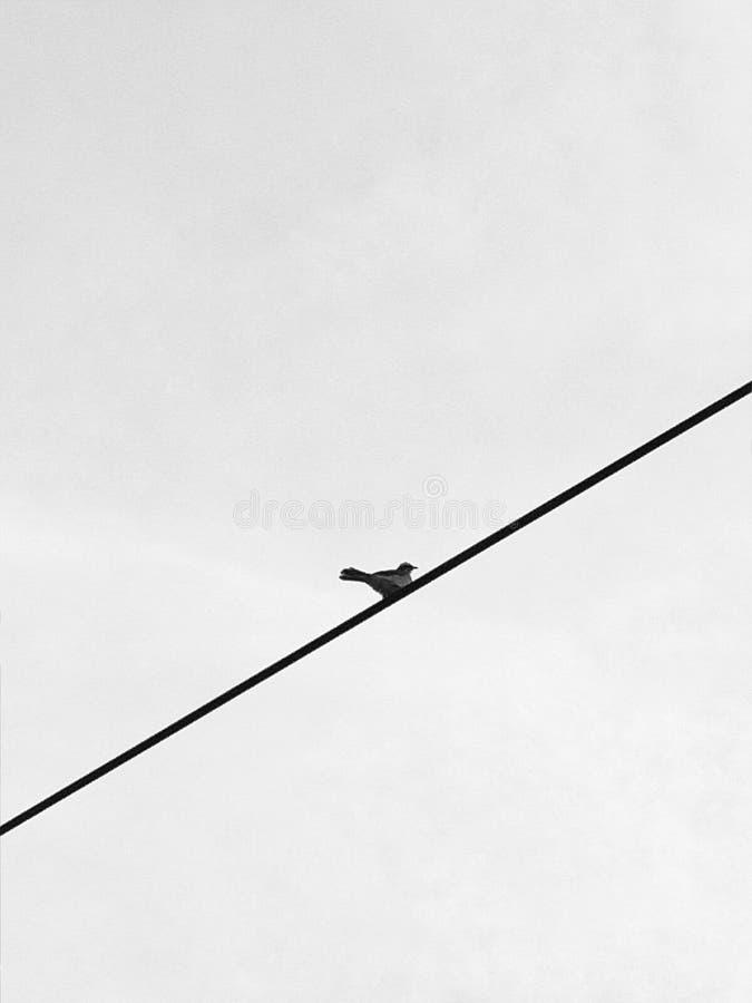 En liten fågel på en tråd royaltyfri fotografi