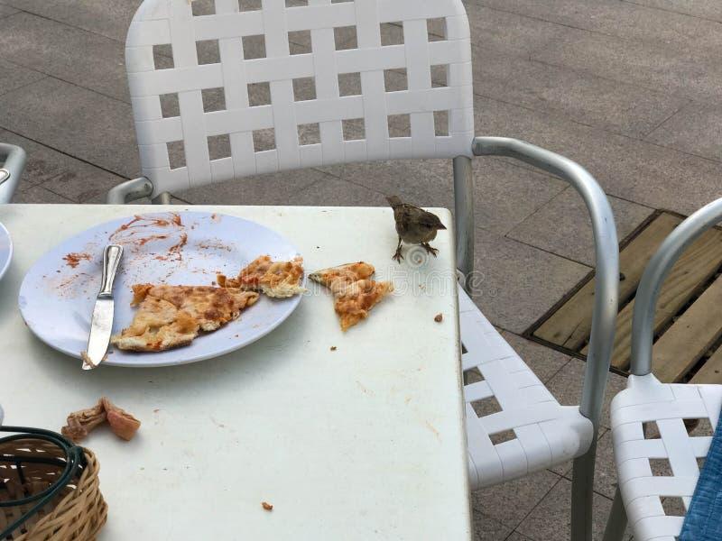 En liten fågel, en sparv äter en läcker pizza från en tabell i ett utomhus- kafé på gatan arkivbilder