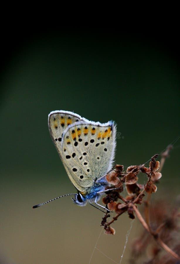 En liten fjäril arkivfoto