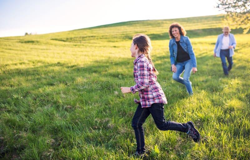 En liten flicka med hennes höga morföräldrar som spelar utanför i natur arkivbilder