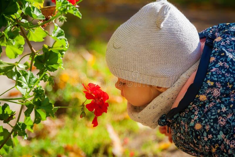 En liten flicka som luktar röda blommor arkivfoto