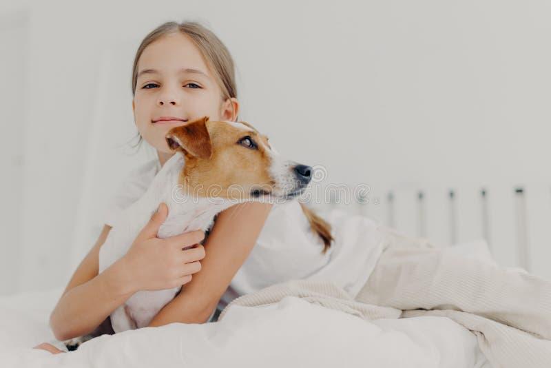 En liten flicka tar emot en liten pedigree-hund, sitter i sängen, spelar med ett favoritsällskapsdjur före sömnen, har en tilltal arkivbilder