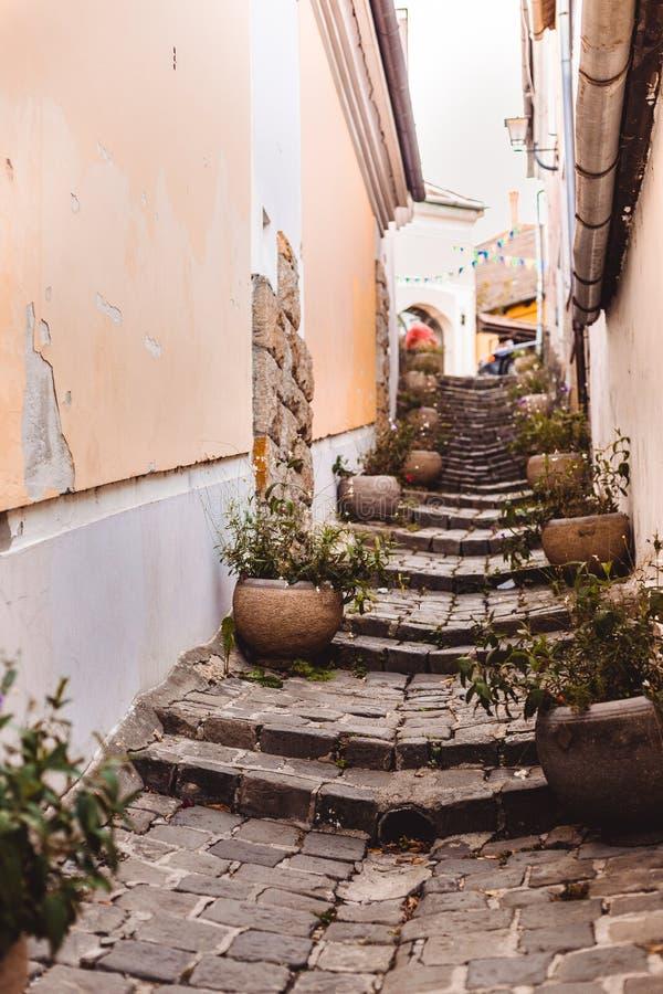 En liten fot- gammal gata som göras av stentegelstenar med stora vaser av blommor royaltyfria bilder