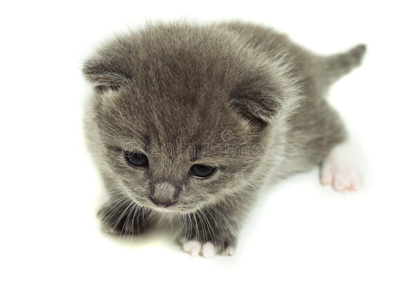 En liten grå kattunge arkivfoton