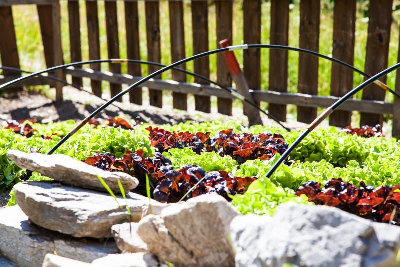 Grönsakträdgård fotografering för bildbyråer