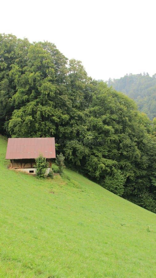 En liten Hutch And Pasture With Rain mist arkivfoto