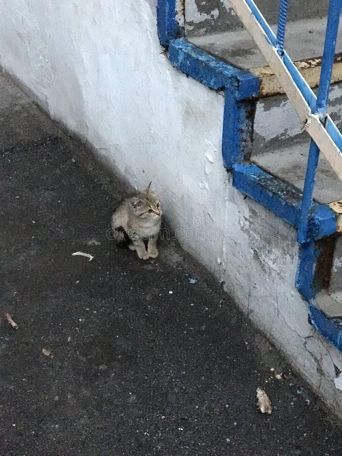 En liten kattunge sitter bredvid en konkret uppsättning av moment royaltyfria foton