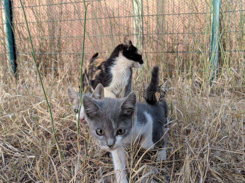 En liten lös katt med hennes moder royaltyfri fotografi