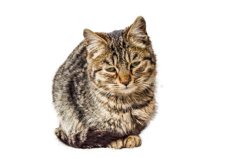 En liten sittande katt med en ledsen blick arkivfoto