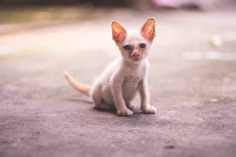 En liten smutsig mager fattig vit kattunge sitter på konkret golv, fotografering för bildbyråer