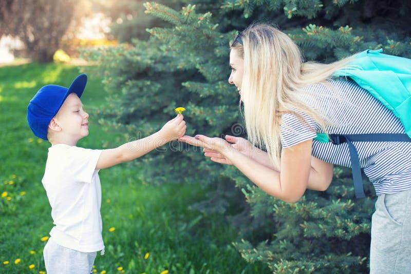 En liten son ger hans moder en maskros royaltyfria foton