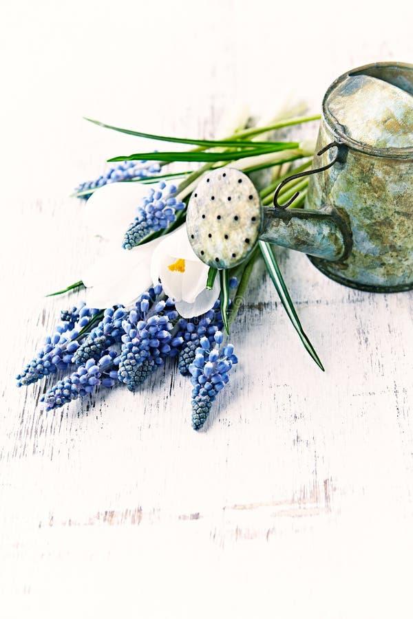 En liten tappning som bevattnar kan, och våren blommar royaltyfri fotografi