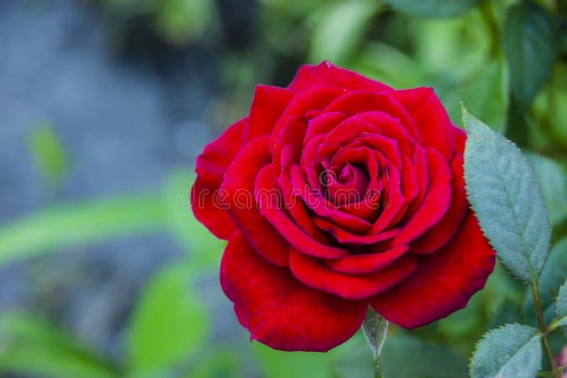 En ljus blomma är en under av naturen i en lös skog royaltyfri fotografi
