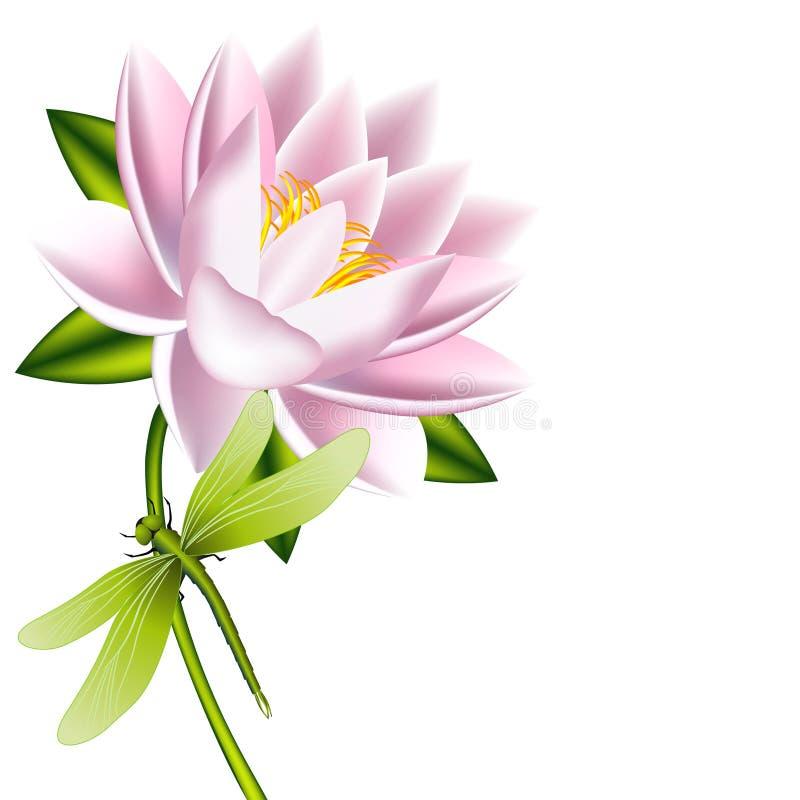 En lotusblommablomma med sländan på en vit bakgrund royaltyfri illustrationer