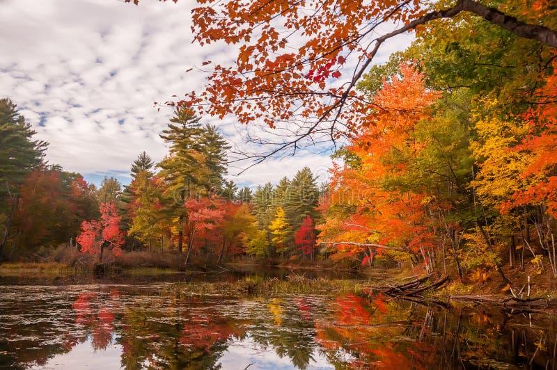 En lugna sjö i skogen med ljust färgade höstträd och reflexioner i vattnet royaltyfria foton