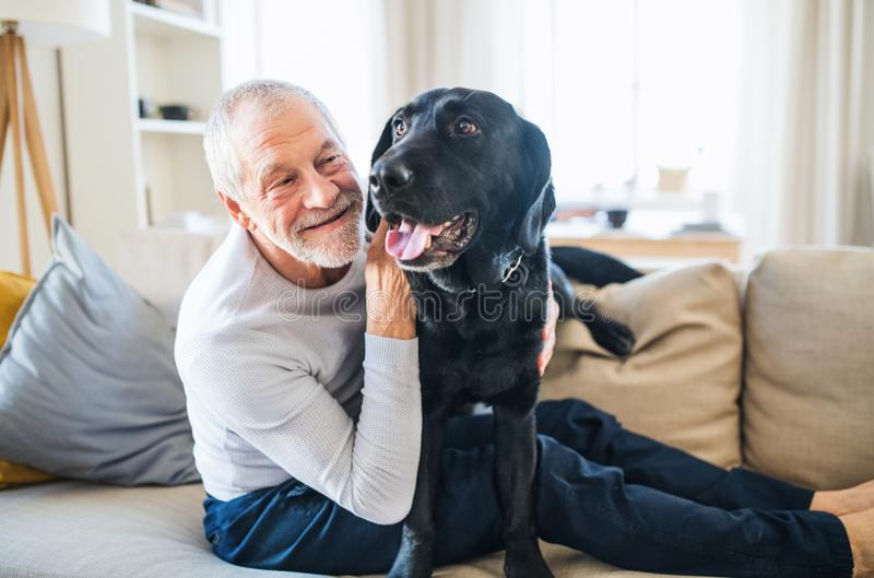 En lycklig hög man som inomhus sitter på en soffa med en husdjurhund hemma royaltyfria bilder