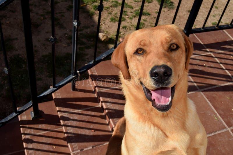 En lycklig hund: Unga arbetsledare med ett lyckligt ansikte arkivbild