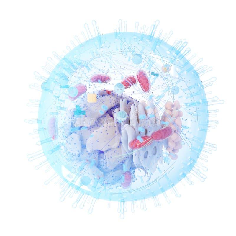 En mänsklig cell royaltyfri illustrationer